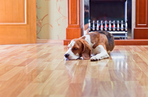 The Best Floors for Pet Owners - Timbertown - Flooring Options Calgary